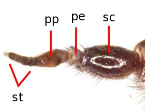 Types Of Antenna In Insects - Best Image Home In The Word